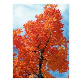 Autumn In Maine Postcard