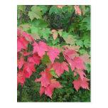 Autumn In Maine Postcards