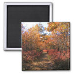 Autumn in New England 32 ~ magnet