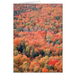 Autumn in Northern Minnesota Card