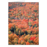 Autumn in Northern Minnesota Greeting Card