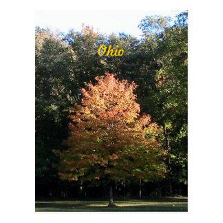 Autumn in Ohio Postcard