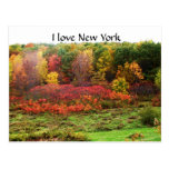 AUTUMN IN RURAL NEW YORK POST CARD