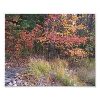 Autumn in the North Woods Photographic Print