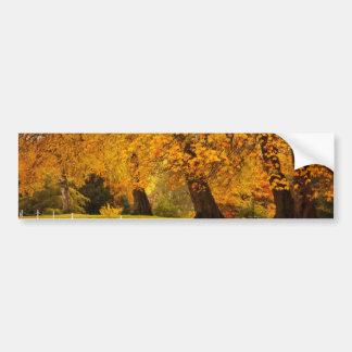 Autumn in the park car bumper sticker