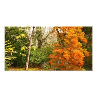 Autumn in the park card