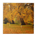 Autumn in the park tiles