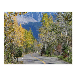 Autumn in the Rockies Postcard
