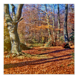 Autumn in the Woods, Sun Shining Poster