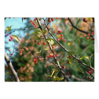 Autumn in Upstate NY Card