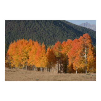 Autumn in Wyoming Poster