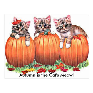 Autumn is the Cat's Meow Postcard