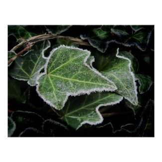 Autumn Ivy ~ print print