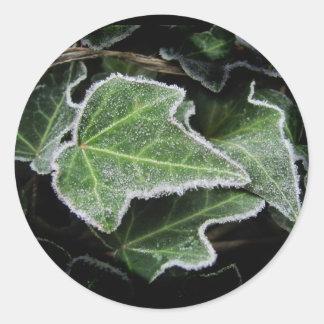 Autumn Ivy ~ sticker