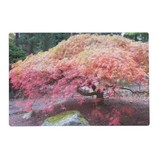 Autumn Japanese Maple Tree Photo Placemat