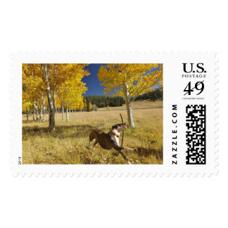 AUTUMN JOY POSTAGE