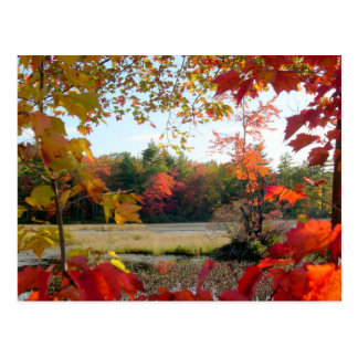Autumn Lake Framed Postcard