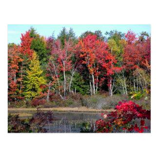 Autumn Lakeside 2 Postcard