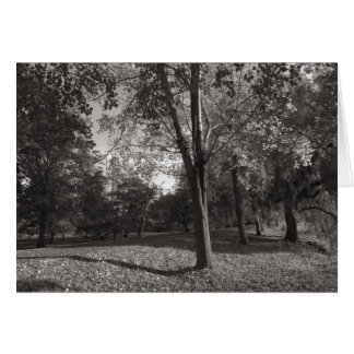 Autumn Landscape, Bute Park, Cardiff Greeting Card