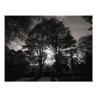 Autumn Landscape Bute Park Cardiff Photograph