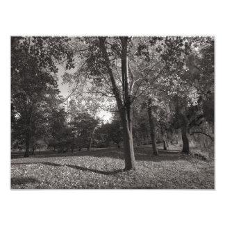 Autumn Landscape, Bute Park, Cardiff Art Photo