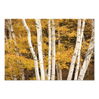 Autumn landscape, Vermont, USA 2 Photo Print