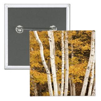 Autumn landscape, Vermont, USA 2 Inch Square Button