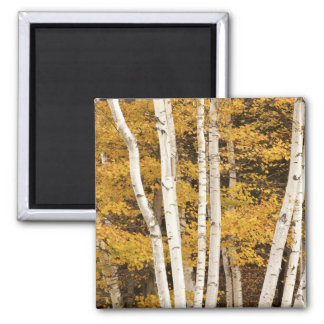 Autumn landscape, Vermont, USA Magnets