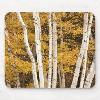 Autumn landscape, Vermont, USA Mouse Pad