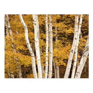 Autumn landscape, Vermont, USA Postcard