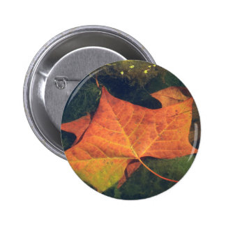 Autumn Leaf Pinback Buttons