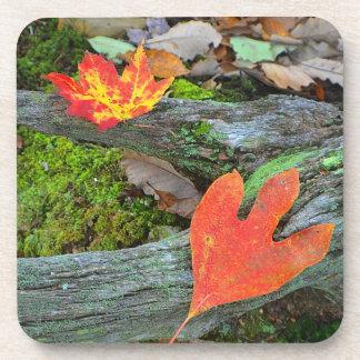 Autumn Leaf Coaster