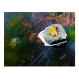 Autumn_Leaf_in_Stream Postcard