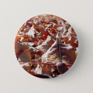 Autumn leaf in the fall button