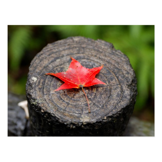 Autumn Leaf on Log Postcard