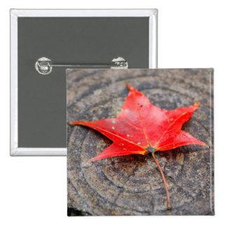 Autumn Leaf on Log Square Button