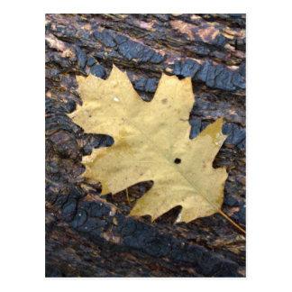 Autumn leaf postcard
