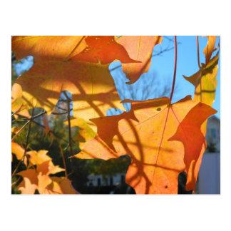Autumn Leaf Shadows Postcard
