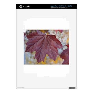 Autumn Leaf iPad 3 Decal