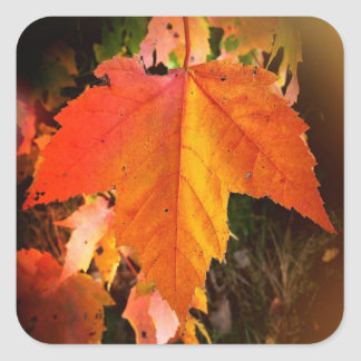 Autumn Leaf Themed Square Stickers, Glossy Square Sticker