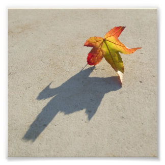 Autumn Leaf with Shadow Photo Print