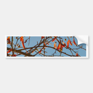 Autumn leafs bumper sticker