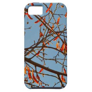 Autumn leafs iPhone SE/5/5s case