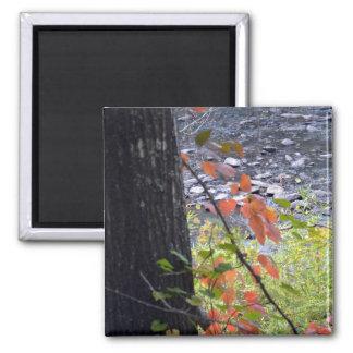 Autumn Leaves-038 Magnet