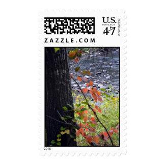 Autumn Leaves-038 Postage