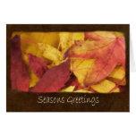 Autumn Leaves 1 Seasons Greetings Greeting Cards