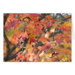 Autumn Leaves 3 Stationery Note Card