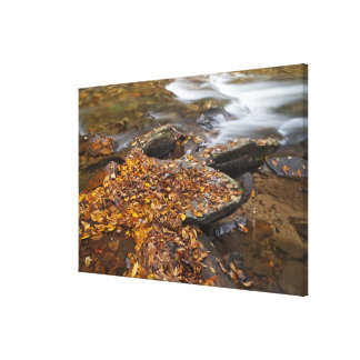 Autumn leaves along Looking Glass Creek in the Canvas Print