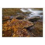 Autumn leaves along Looking Glass Creek in the Greeting Card