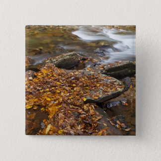Autumn leaves along Looking Glass Creek in the Pinback Button